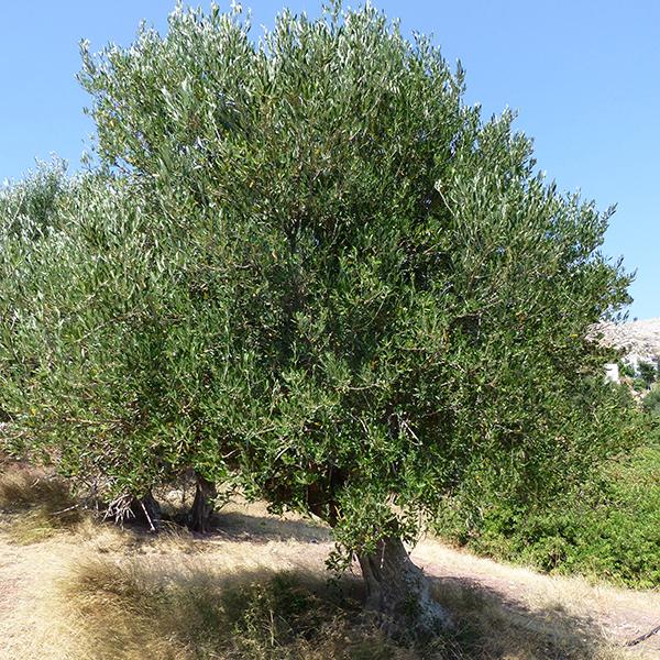 olivierP1000753