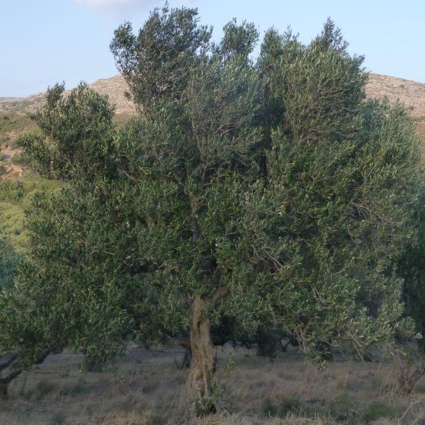 olivierP1000858